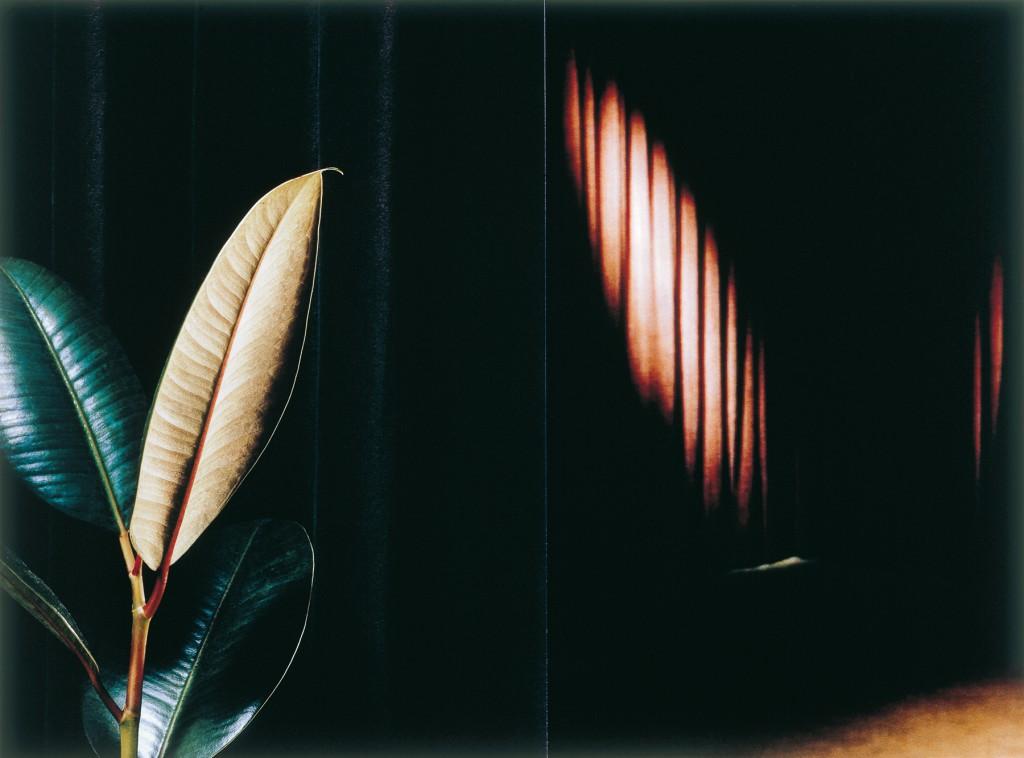 Pflanze / 2007